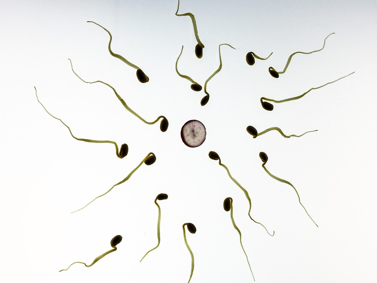 Timing intercourse with low sperm count